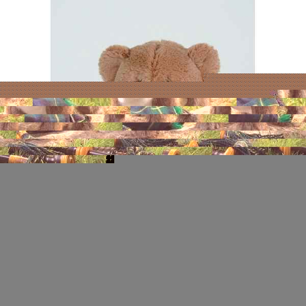 chat Scottish fold kitten Folkmanis -2989